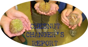 Chesnut Changer's Report