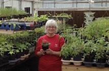 dcg plant sale