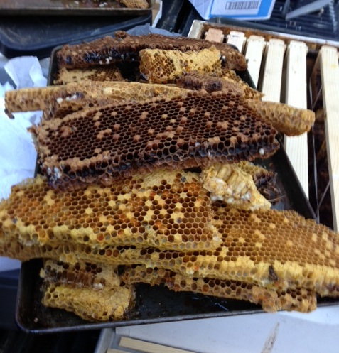 Bee Honey Comb