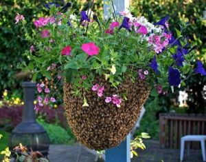 honeybeesswarm