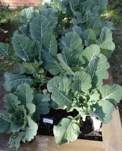 Collard greens for teachers